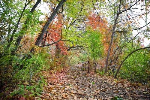 path  fall  autumn