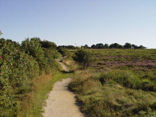 path heathland sylt