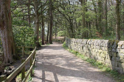 path woods footpath