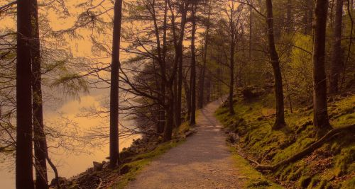 Path In The Late Sun