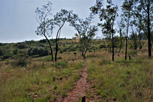 Path In Veld