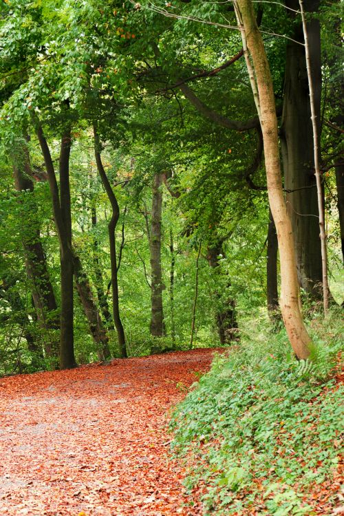 ruduo, kritimas, lapija, pėsčiųjų takas, miškas, žalias, lapai, gamta, lauke, parkas, kelias, kelias, kelias, kaimas, sezonas, medis, kelias, miškai, kelias miške