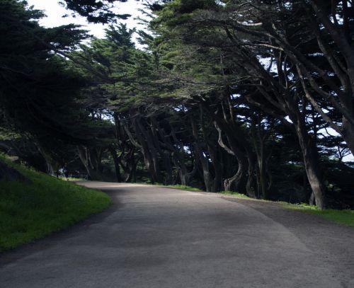 Path Through Cypress Forest