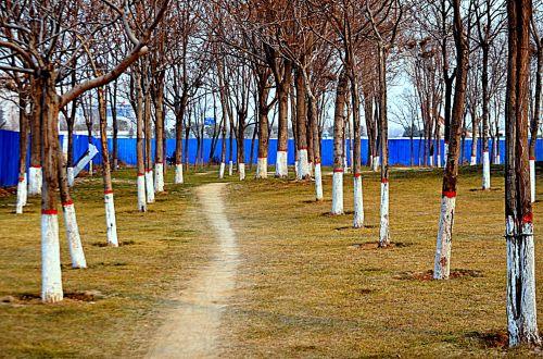 kraštovaizdis, kelias, kelias, takas, medžiai, parkas, kelias per medžius