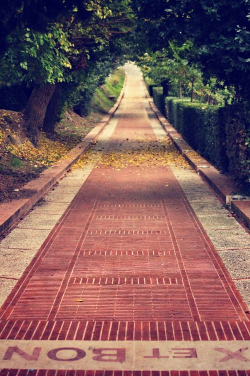 pathway brick street walkway