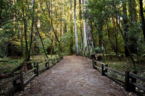 kelias,pėsčiųjų takas,miškas,miškai,aplinka,medžiai,kelias,vaikščioti,kelias,kaimas,ramus,kaimas,gamta,peizažas,takas,tvora,tvoros,vaizdingas,kelias,žygiai,žaluma