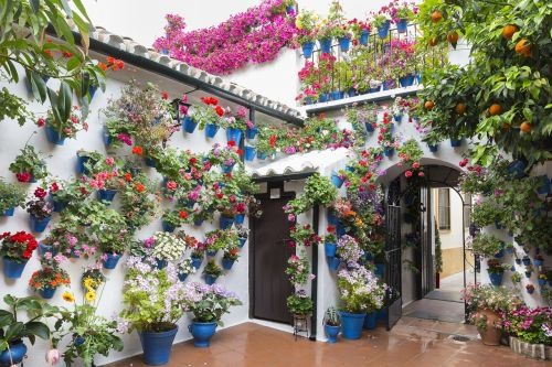 patios de córdoba flowerpot green