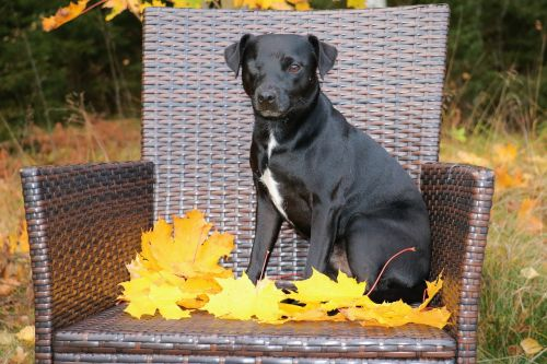 patterdale terrier terrier dog