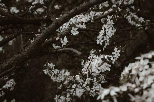 pattern moody flowers
