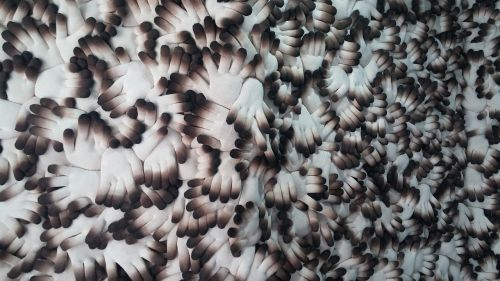 pattern wallpaper organization