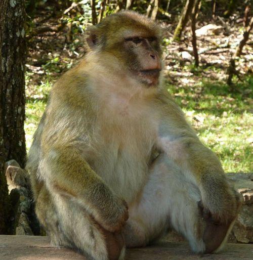 pause monkey sitting