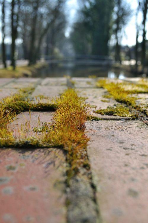 paved away moss