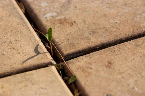 paving bud cross