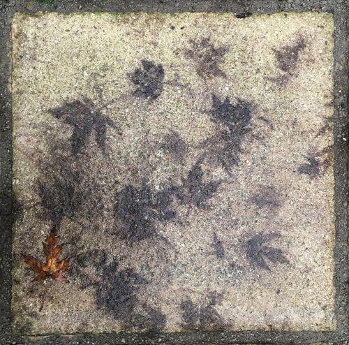 paving leaf autumn