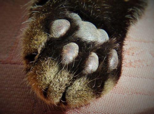 paw cat's paw paw print