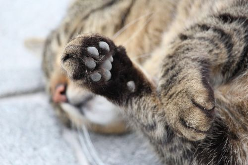 paw cat's paw cat