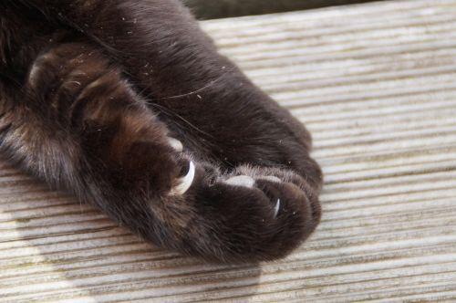 paw cat paw foot
