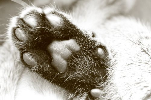 paw cat fur
