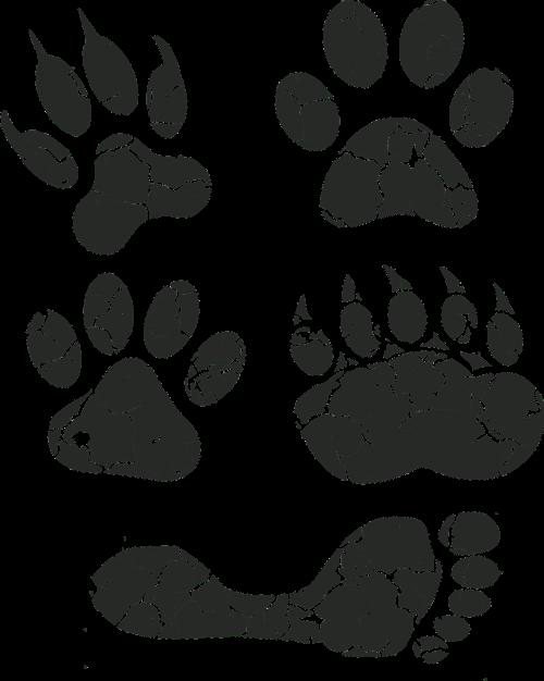 paw print paw foot prints