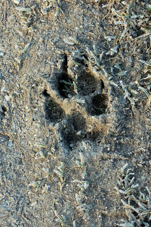 paw print reprint trace