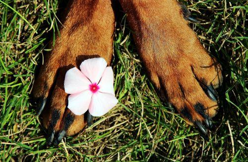 paws pads flower