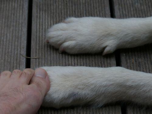 paws animal dog