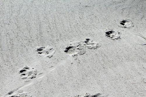 paws  sand  beach