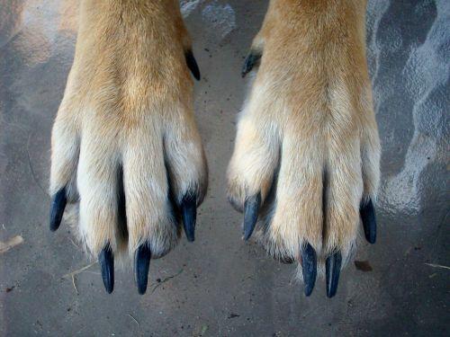 paws dog animal
