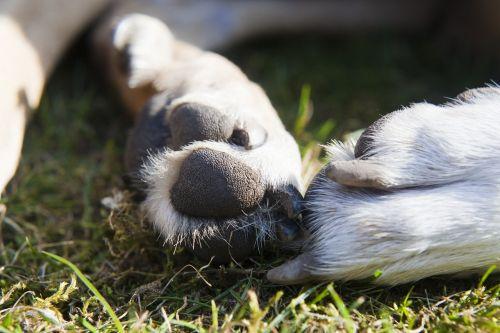 paws dogs animal