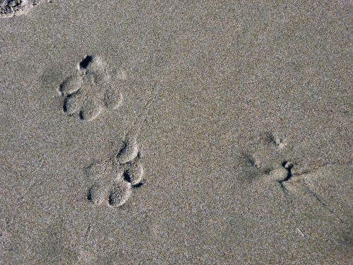 Paws In The Sand