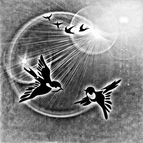 peace dove birds peace