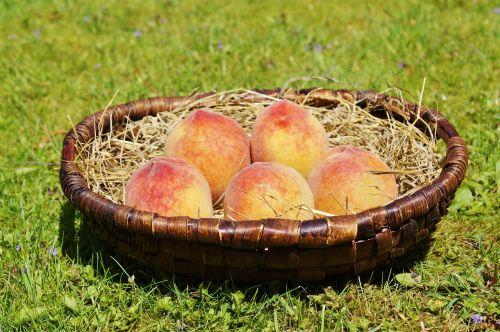 peach fruit pome fruit