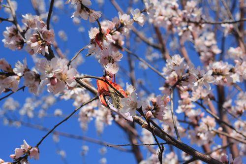 peach blossom peach embankment tianjin