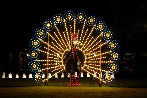 peacock lichtspiel night