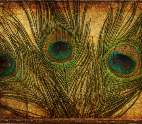 Peacock Feathers Vintage Background