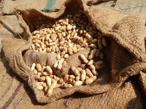 peanut peanut bag raw peanut