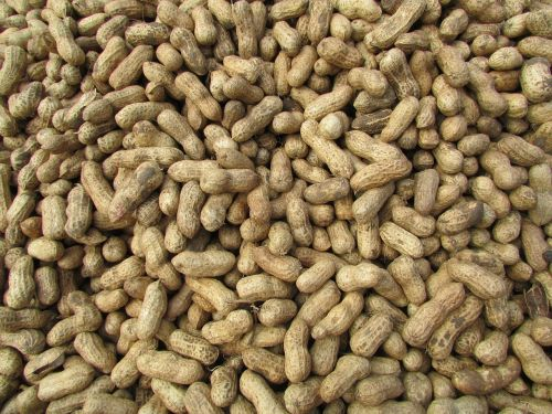 peanut ground nuts bangalore