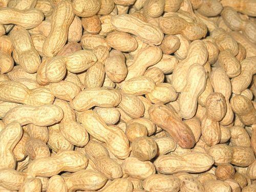 peanuts christmas nuts