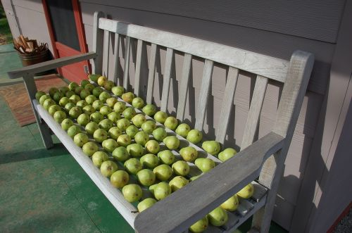 pears pears on bench fruit