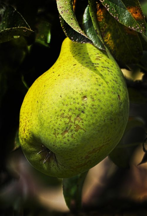 pear the last bulb fruit