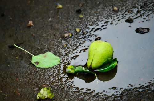 pear puddle water