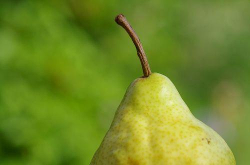 pear fruit fruits