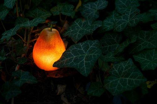 pear  light bulb  garden