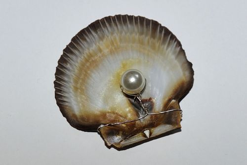 pearl valuable nature