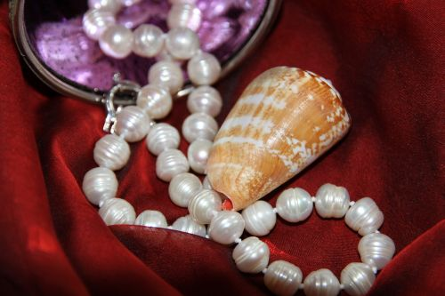 pearl conch red