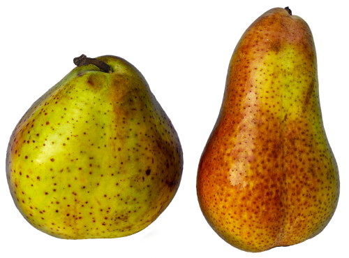 pears fruit pome fruit
