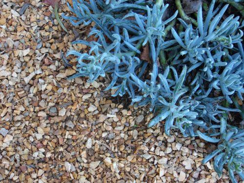Pebbles And Succulent Plants