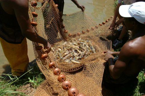 Fishing For Crayfish