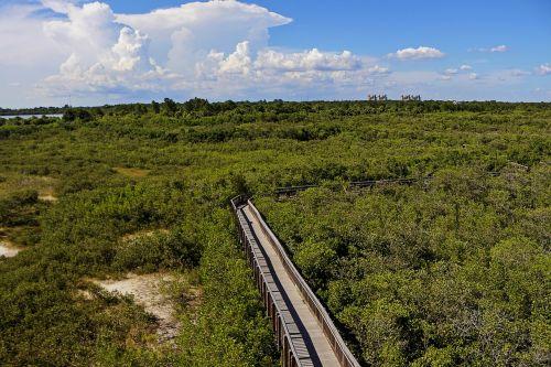pedestrian bridge forest mangrove swamp