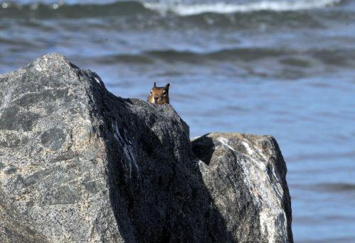 Peeking Squirrel